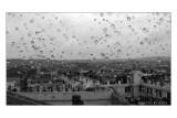 Roma in un giorno di Pioggia dal Quirinale