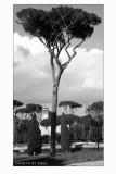 Villa Borghese: Il grande Pino e la Casina di Raffaello_light.jpg