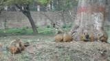 NEPAL Villes - Monuments - Katmandou 22 mars:31mars2014 - 010.jpg