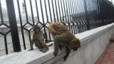 NEPAL Villes - Monuments - Katmandou 22 mars:31mars2014 - 015.jpg