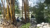 NEPAL Villes - Monuments - Katmandou 22 mars:31mars2014 - 048.jpg
