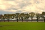 Rij bomen