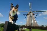 Kat van de molenaar