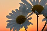 Bij zonsondergang