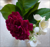 Unknown rose with mock orange