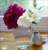 Unknown rose and mock orange