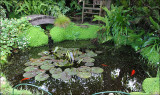 One of our ponds