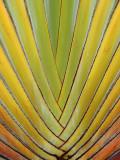 Palm patterns