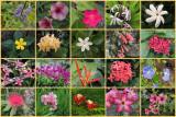 Flowers of St John, USVI