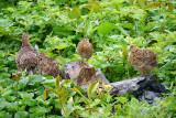 Wildlife of Alaska
