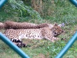 Cleveland Zoo 2013