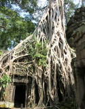 SIEM REAP - The temples of Angkor
