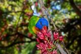 Parrot in the Botanical Gardens, Adelaide