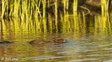 Beaver, California Delta 9