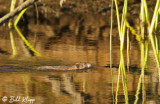 Beaver, California Delta 10