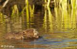 Beaver, California Delta 11