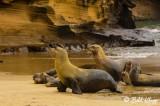 Sea Lions, San Cristobal Island