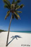 Palm Shadows, Varadero  1