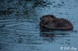 Beaver, California Delta 15