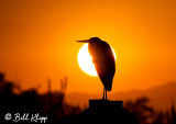 Great Blue Heron Sunset 3