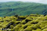 Mossy Rocks, Southern Coast  1