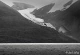 Glacier, Icy Arm, Buchan Fjord Baffin Island  2