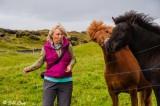 Westman Islands Horses   2