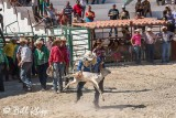 Calf Roping, Cuban Rodeo 2