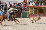 Calf Roping, Cuban Rodeo 7