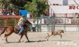Calf Roping, Cuban Rodeo 9