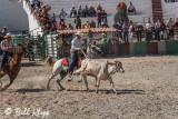 Steer-tailing, Cuban Rodeo  8
