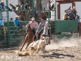 Steer-tailing, Cuban Rodeo  11