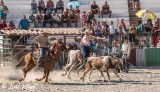 Steer Wrestling, Cuban Rodeo  3