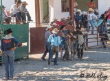 Bull Riding, Cuban Rodeo 4