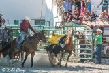 Steer Wrestling, Cuban Rodeo  5