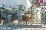 Steer Wrestling, Cuban Rodeo  6