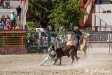 Steer Wrestling, Cuban Rodeo  8