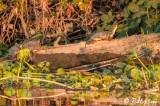 Delta Turtles  1