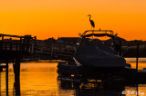 Great Blue Heron at Sunset  6