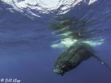 Humpback Whale Underwater  4