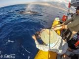 Humpback Whale Mugging  4