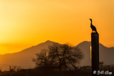 Cormorant Sunset   1