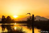 Cormorant Sunset   3