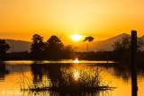 Cormorant Sunset   4