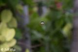 Orb-Weaver Spider  2