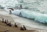 Orca Attack  14