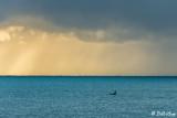 Orca Sunrise  2