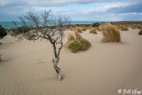 Dunes, Peninsula Valdes  6