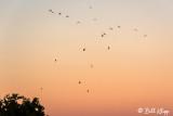 Falling Skies Hunting Canada Geese  1