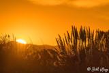 Delta Sunset  1